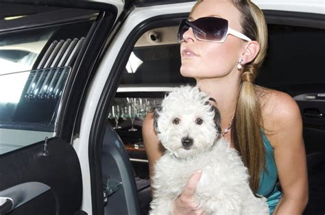 pet stores in los angeles that sell puppies beverly prohibits pet stores from selling commercially bred animals urdogs