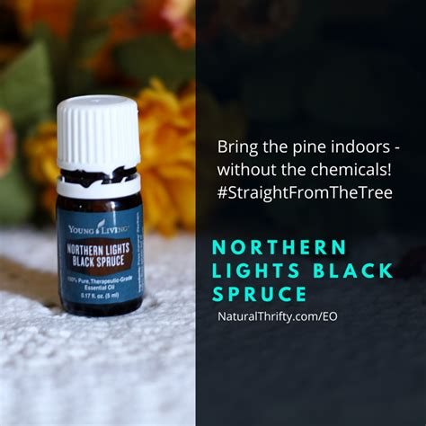 northern lights black spruce essential 11 essential oils for fall winter wellness thrifty