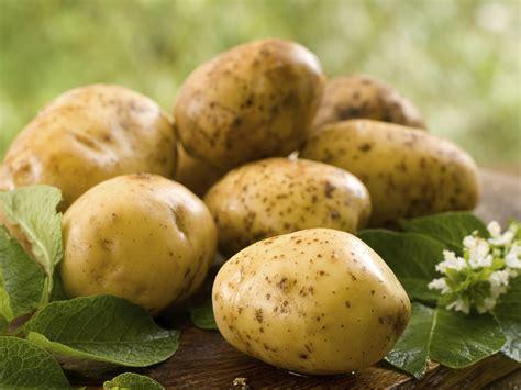 come cucinare patate dolci come cucinare le patate le ricette de la cucina italiana