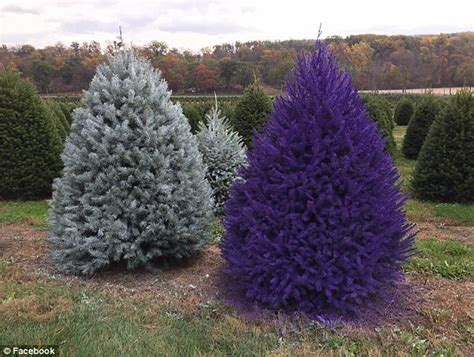 cost of tree wycoff tree farm nj new jersey farm is selling rainbow trees daily mail