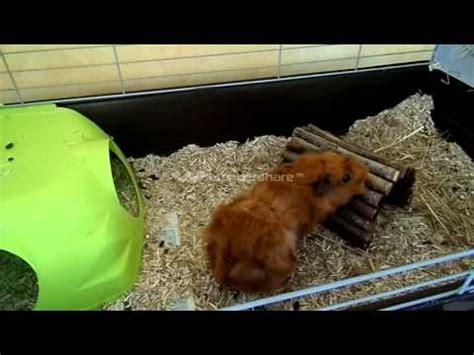 Construire Un Hamac by Comment Construire Un Hamac Pour Cochon D Inde La