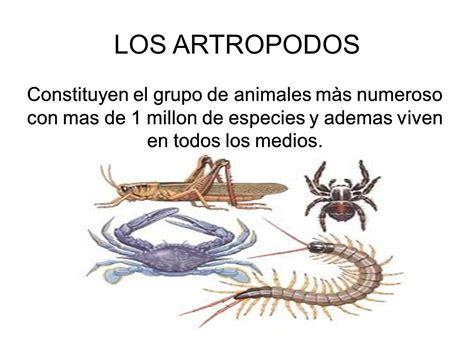 imagenes animales artropodos los artropodos constituyen el grupo de animales m 224 s