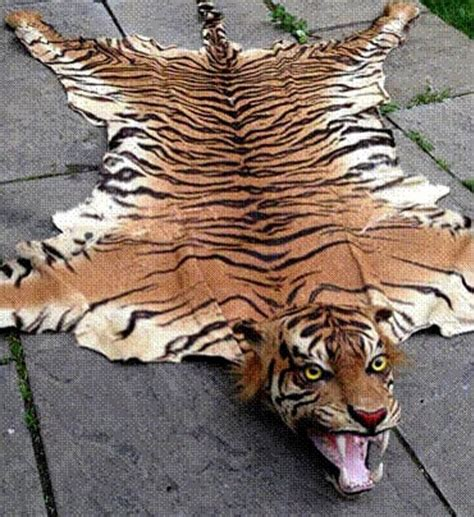 the tiger skin rug tries to sell illegal javan and bali tiger skins on ebay metro news