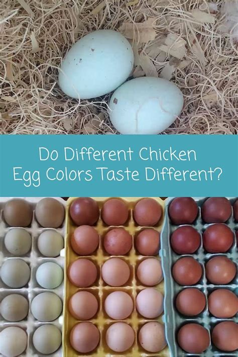 do chickens lay colored eggs do different chicken egg colors taste different