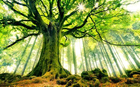 trees background tree background images 183