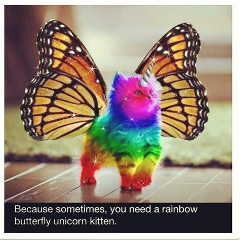 Unicorn Rainbow Meme - rainbow unicorn kitten meme google search the owl and