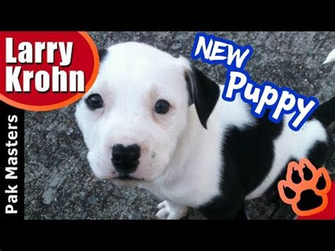 bringing a puppy home for the time what to do when bringing your new puppy home for the time