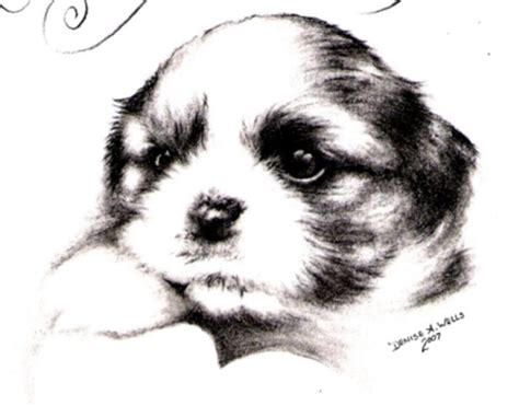 shih tzu drawing easy dogs shih tzu puppy by a drawings of puppies litle pups