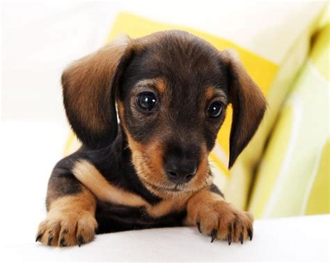 small dogs with small breeds with images and names wallpaper