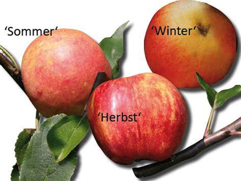 apfelbaum mehrere sorten familienbaum apfel mit 3 verschiedenen sorten