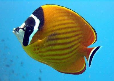jenis jenis ikan hias air laut agen judi