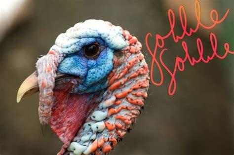 pics of a turkey neck warning to women koch s tour