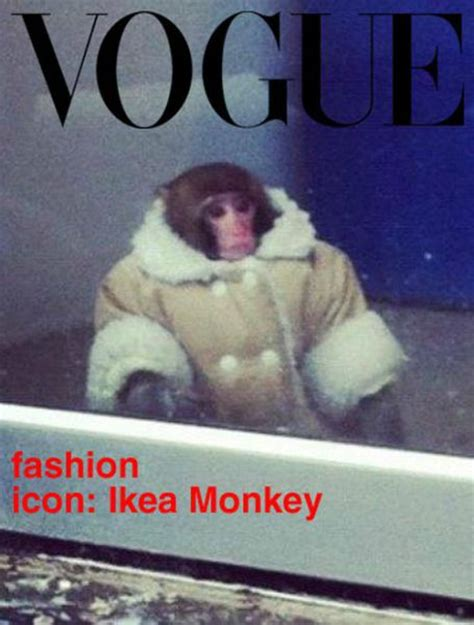 Sexy Monkey Meme - hilarious ikea monkey memes 32 pics 2 gifs izismile com