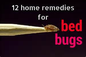 home remedies to get rid of bed bugs permanently bed bug home remedies q a