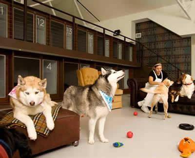 layout de hotel para cachorro c 227 es fazem fila em hot 233 is petrede
