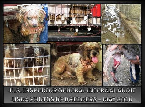 puppy mill definition 86 best animal welfare images on animal rescue animal rights and cat