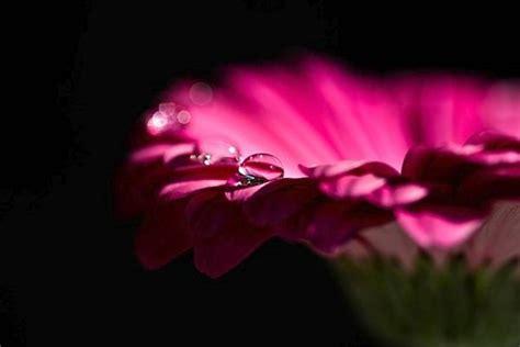 i fiori di bach sono efficaci acne cause e rimedi naturali naturopataonline