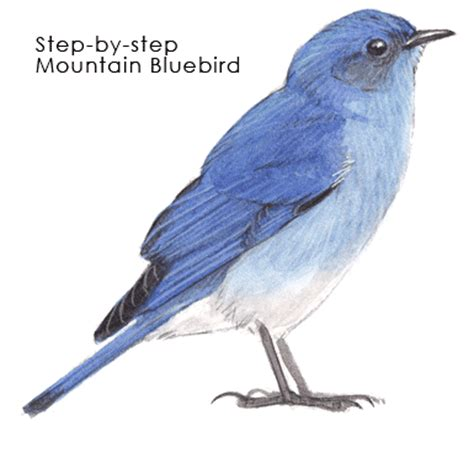 bluebird mountain step by step john muir laws