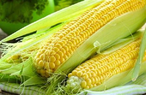 membuat martabak jagung tips membuat jagung rebus lebih manis katalog kuliner