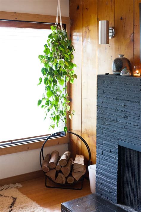indoor plant options for apartments cozy bliss 747 best images about green thumb on pinterest