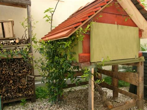 casa per galline galline in giardino espertocasaclima