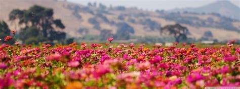 wallpaper flower field flower field wallpaper 2304x864 66436