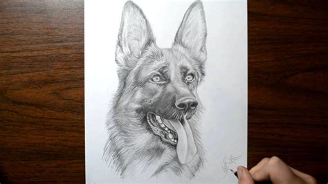 how to a german shepherd like a how to draw a german shepherd