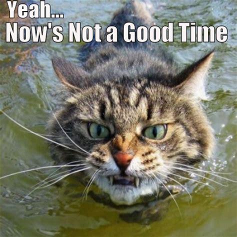Laughing Cat Meme