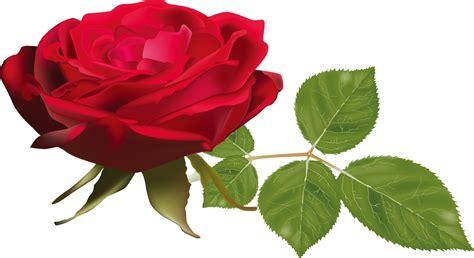imagenes de rosas verdaderas バラのイラスト 画像no 571 リアルなバラ 無料のフリー素材集 百花繚乱