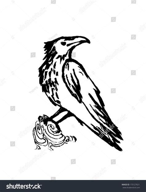 Vector Raven Black Sketch On White Stock Vector 175127621 Shutterstock Vector Image Black White Sketch