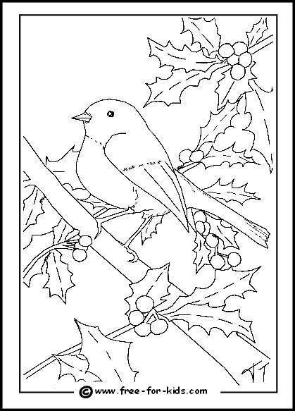 coloring page of a robin robin birds coloring pages