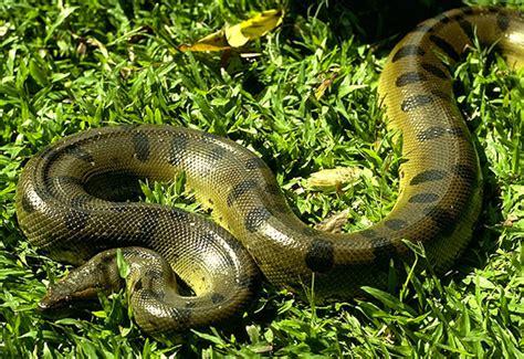 youtube film india ular menuda mascota las serpientes