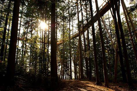 visitor pattern walk tree the longest tree top walk in the world 171 twistedsifter