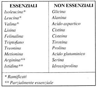 alimenti aminoacidi essenziali elementi di alimentazione digestione carboidrati lipidi