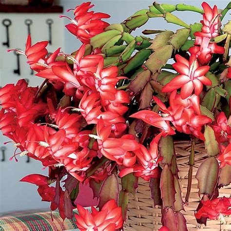Best Planter Flowers by Top Flowers Plants