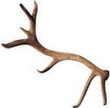 deer will usually shed their antlers at the same time each