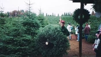 christmas tree farms in sacramento u cut tree farms near sacramento trekaroo