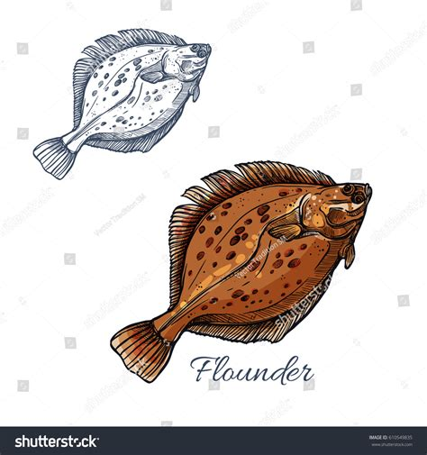 coloring pages flatfish cute cooked halibut flounder flatfish vector coloring