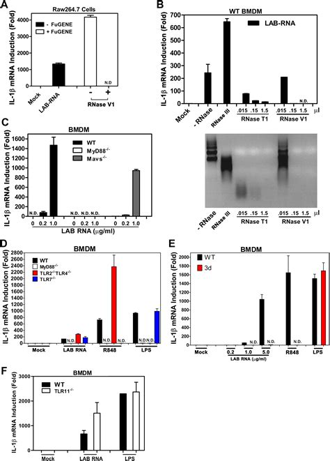 figure open or not sequence specific detection of bacterial 23s ribosomal rna
