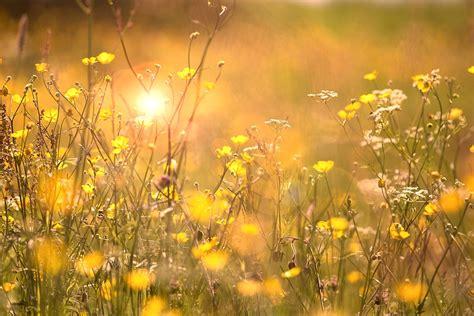 fiori in estate fiori estate natura 183 foto gratis su pixabay