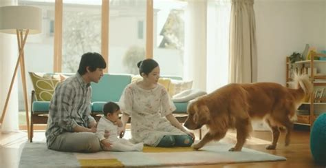 sad puppy commercial new commercial featuring a woefully sad will make you roar critter
