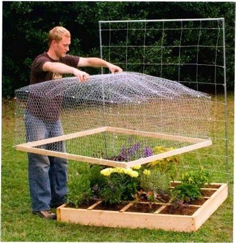 square foot gardening without raised beds 25 best ideas about grow strawberries on how