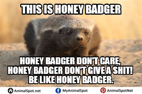 Honey Badger Meme Generator - honey badger memes 28 images honey badger meme