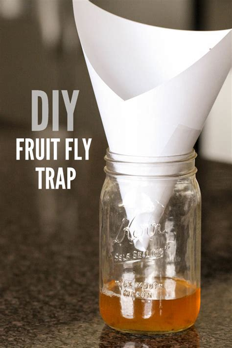 fruit fly trap diy fruit fly trap