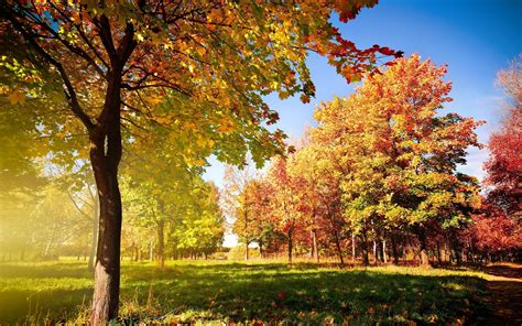 leaves and trees trees and leaves wallpapers 2560x1600 1200995