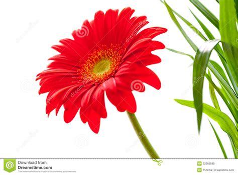Gerbera Designs Xl Messenger by Flower Background Gerbera Flower Flower Design