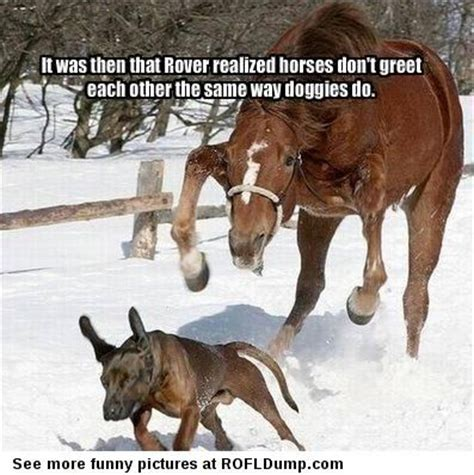 Funny Horse Memes - horse memes funny image memes at relatably com