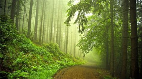 forest green dark forest green quotes
