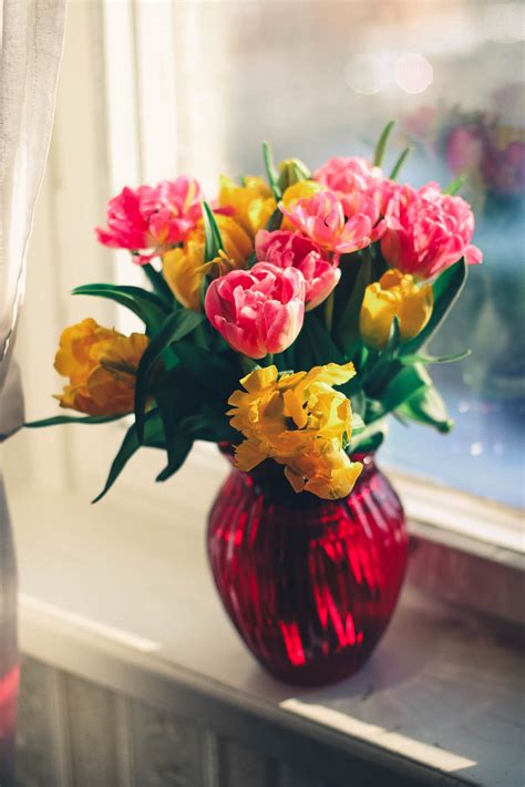 flowers in vase pink and yellow petaled flower on glass vase 183 free