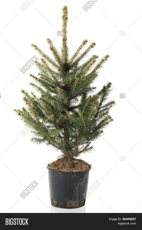 3ft everyday collections potted feel real artificial christmas tree best 28 real tree in a pot how to buy the best real tree saga 4ft